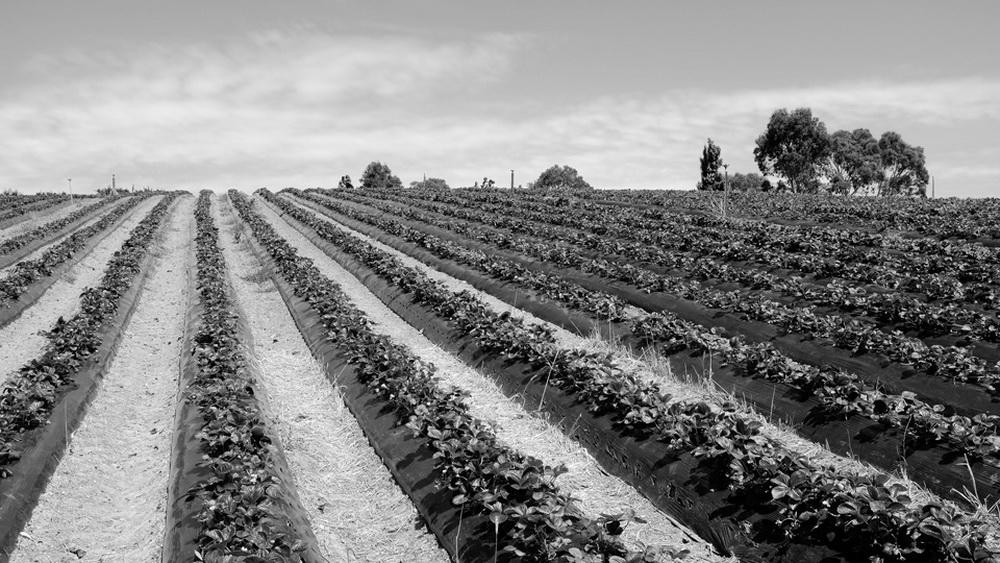 農場及1 (34).jpg