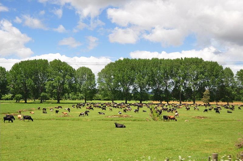 農場22 (8).jpg