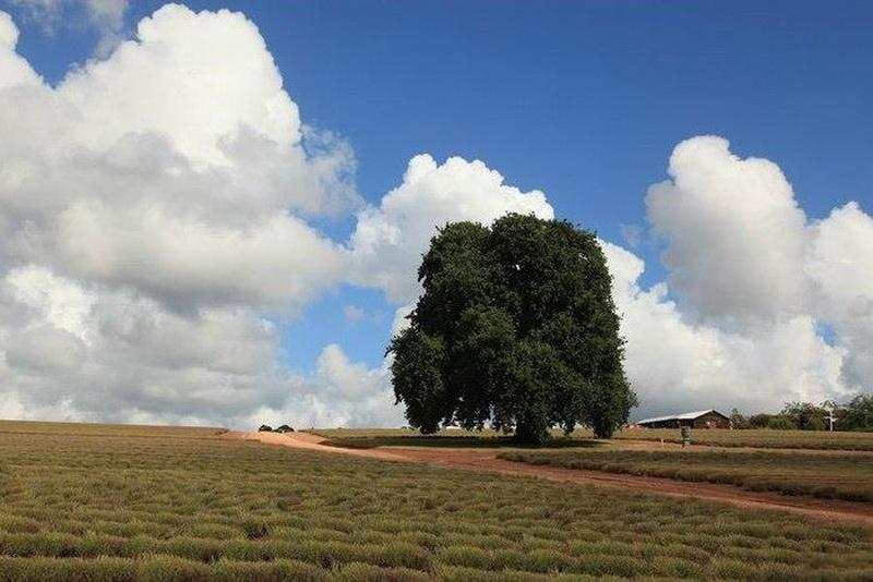 農場22 (2).jpg