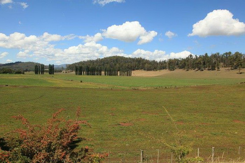 農場22 (4).jpg